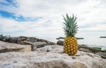 pineapple-supply-co-65674.skaliert.2skal.jpg